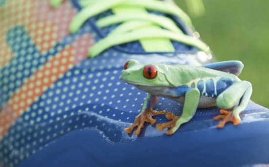 The new FJ shoe was inspired by the Red Eyed Tree Frog for its flexibility and grip