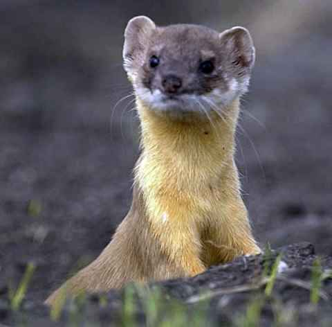 Sneaky L Weasel's picture