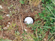 Are you entitled to relief if your ball is in a hole NOT CREATED by animals?