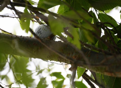 Mackenzie Hughes' golf ball STAYS IN A TREE at the US Open!