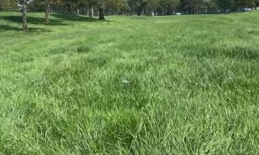 You won't believe how deep the rough is at the US Open this week...