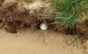 Rules Debate: Is this golf ball classed as IN THE BUNKER?