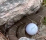 Golf fans react as a player's ball STOPS next to a SNAKE!