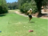Golf fans react to HILARIOUS FAKE SNAKE prank on the golf course